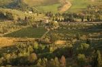 托斯卡纳山丘和葡萄园