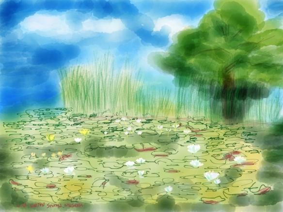 我笔下的睡莲池塘
